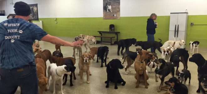inn the dog house careers  u00bb dog daycare attendant
